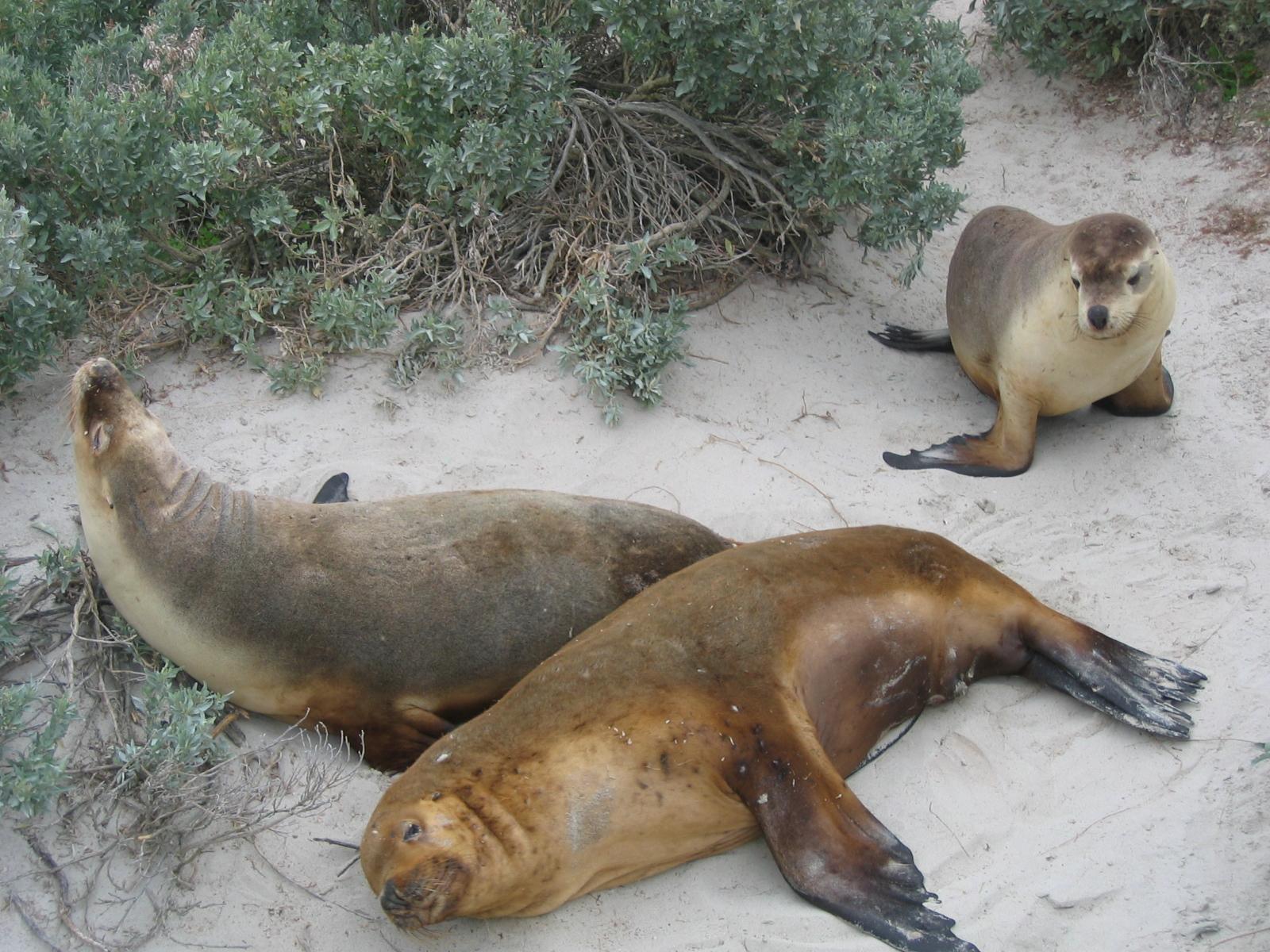 kangaroo island 2006 218